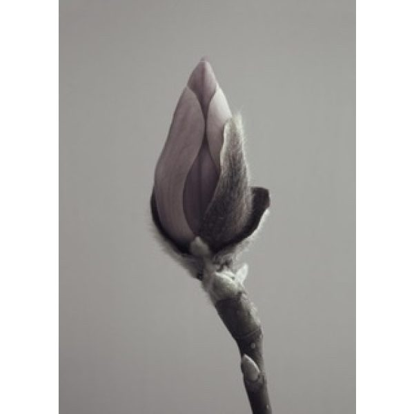 Magnolia Poster 30x40 cm Storefactory My Home and More